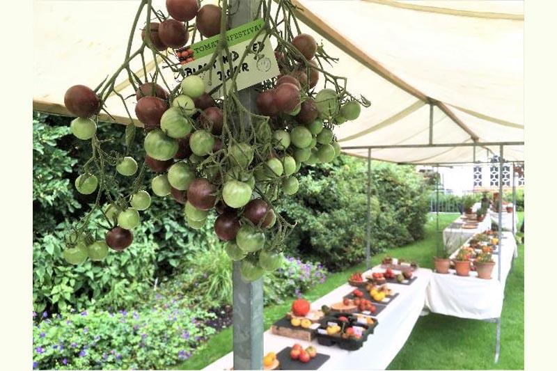Tomatenfestival Kalmthout 2020